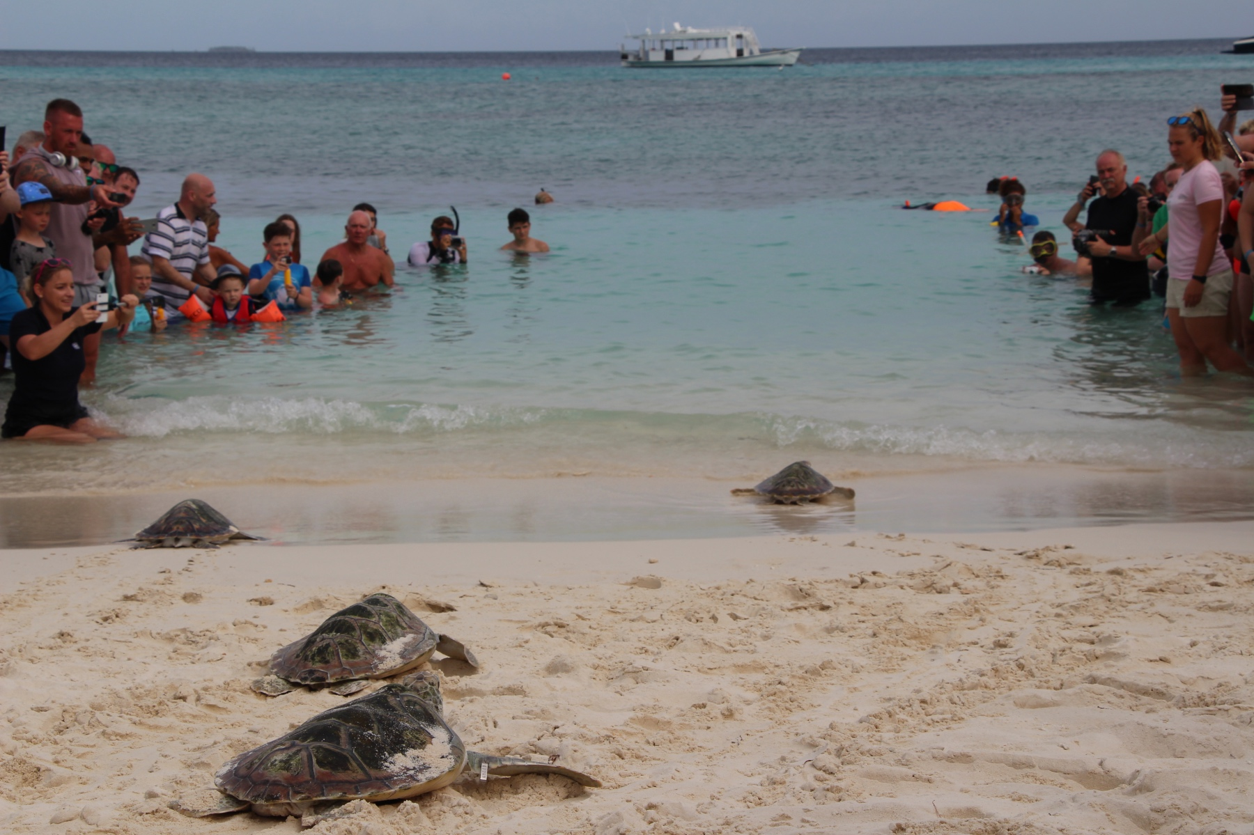 Kuredu Turtle Release with Olive Ridley Project