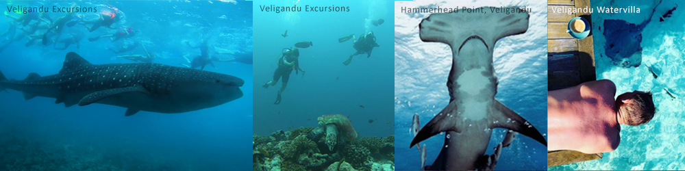 Diving with Veligandu Island Maldives
