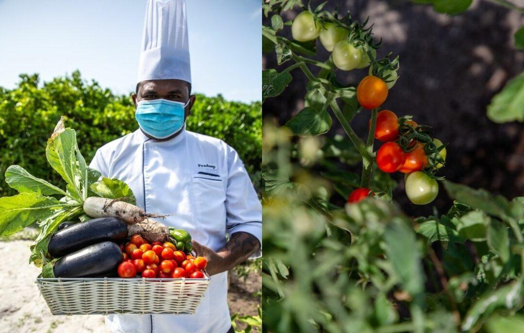 Sustainable Vegetable Garden - Innahura Maldives Resort