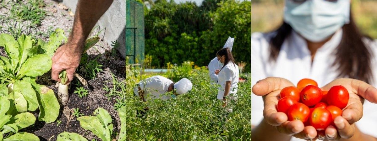 Vegetable & Herb Garden - Innahura Maldives Resort