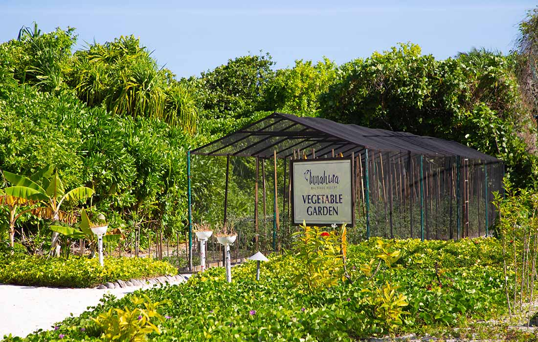 Innahura Maldives Resort - Organic Vegetable Herb Garden