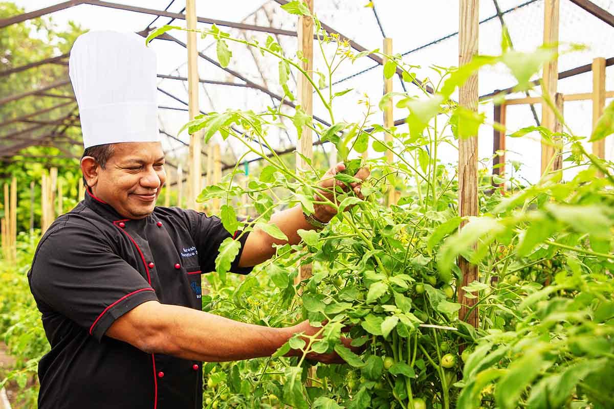 Vegetable Garden - Innahura Maldives Resort